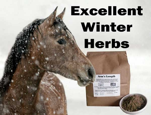 Excellent Winter Horse Herbs